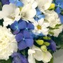 blue-and-white-posy-arrangement